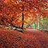 Red Carpet, Beech